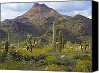 Teddybear Canvas Prints - Saguaro And Teddybear Cholla Canvas Print by Tim Fitzharris