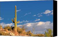 White Cacti Canvas Prints - Saguaro cactus - Symbol of the American West Canvas Print by Christine Till