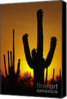 Cactus Canvas Prints - Saguaro Sunset Canvas Print by Sandra Bronstein