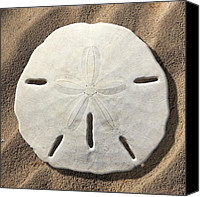 Ocean Scene Canvas Prints - Sand Dollar Canvas Print by Mike McGlothlen