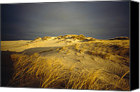 Nauset Beach Canvas Prints - Sand Dunes And Beach Grass In Golden Canvas Print by James P. Blair