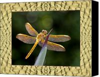 Florida Nature Photography Canvas Prints - Sandflow Dragonfly Canvas Print by Bell And Todd