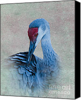 Sandhill Crane Canvas Prints - Sandhill Crane Canvas Print by Betty LaRue