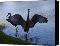 Sandhill Crane Canvas Prints - Sandhill Cranes 2 Canvas Print by Larry Underwood