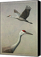 Sandhill Crane Canvas Prints - Sandhill Cranes Canvas Print by James W Johnson