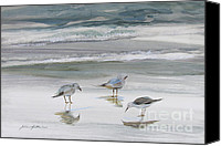 Watercolor On Paper Canvas Prints - Sandpipers Canvas Print by Julianne Felton