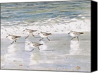 Snowy Canvas Prints - Sandpipers on Siesta Key Canvas Print by Shawn McLoughlin