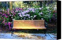 Savannah Square Canvas Prints - Savannah Bench Canvas Print by Carol Groenen