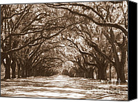 Live Oaks Canvas Prints - Savannah Sepia - Glorious Oaks Canvas Print by Carol Groenen