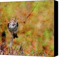 Savannah Square Canvas Prints - Savannah Sparrow . Texture . Square . 40D5883 Canvas Print by Wingsdomain Art and Photography
