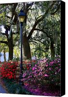 Savannah Square Canvas Prints - Savannah Street Lamp in Springtime Canvas Print by Carol Groenen