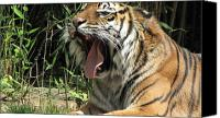 Bigcat Canvas Prints - Say Aaah Canvas Print by Mary Ivy