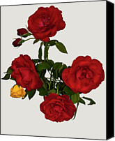 Rose Photography Canvas Prints - Say It With Flowers Canvas Print by ©Daniela White Images