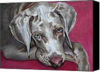 Pet Portrait Canvas Prints - Scooby Weimaraner Pet Portrait Canvas Print by Enzie Shahmiri