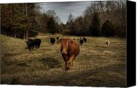 Barn Digital Art Canvas Prints - Scotopic Vision 9 - Cows Come Home Canvas Print by Pete Hellmann