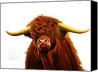 Jurek Zamoyski Canvas Prints - Scottish Highlander Canvas Print by Jurek Zamoyski