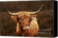 Farms Canvas Prints - Scottish Moo Coo - Scottish Highland cattle Canvas Print by Christine Till