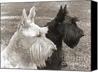 Scottie Dog Canvas Prints - Scottish Terrier Dogs in Sepia Canvas Print by Jennie Marie Schell