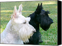 Scottie Dog Canvas Prints - Scottish Terrier Dogs Canvas Print by Jennie Marie Schell
