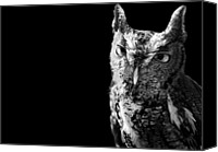 Bird Of Prey Canvas Prints - Screech Owl Canvas Print by Malcolm MacGregor