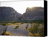 Big Bend Canvas Prints - Scrub Grass in Bing Bend Canvas Print by M K  Miller