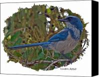 Scrub-jay Photo Canvas Prints - Scrub Jay Canvas Print by Larry Linton