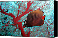 Sea Animals Canvas Prints - Sea Fan And Butterflyfish Canvas Print by Takau99