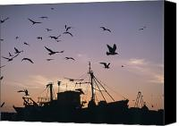 Moroccan Canvas Prints - Sea Gulls Flying Over Fishing Boats At Canvas Print by Axiom Photographic