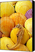 Horse Canvas Prints - Sea horse and sea shells Canvas Print by Garry Gay