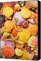 Icons Canvas Prints - Sea horse starfish and seashells  Canvas Print by Garry Gay