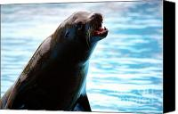 Fisher Canvas Prints - Sea-Lion Canvas Print by Carlos Caetano