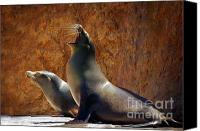 Captive Canvas Prints - Sea Lions Canvas Print by Carlos Caetano
