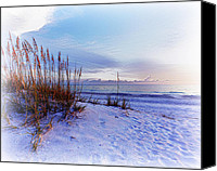 Morning Special Promotions - Sea Oats 3 Canvas Print by Skip Nall