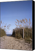 Sand Fences Canvas Prints - Sea oats line the path Canvas Print by Taylor S. Kennedy