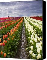 Vernon Canvas Prints - Sea of Color Canvas Print by Mike  Dawson