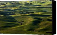 Rolling Hills Canvas Prints - Sea of Green Canvas Print by Mike  Dawson