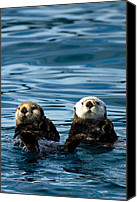 Otter Photo Canvas Prints - Sea Otter Pair Canvas Print by Adam Pender