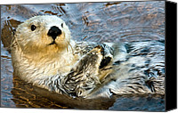 Otter Photo Canvas Prints - Sea Otter Portrait Canvas Print by Jim Chamberlain