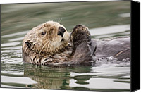 Otter Photo Canvas Prints - Sea Otter Profile Canvas Print by Tim Grams