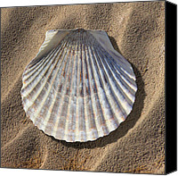 Ocean Scene Canvas Prints - Sea Shell 2 Canvas Print by Mike McGlothlen