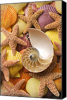 Chambers Canvas Prints - Sea shells and starfish Canvas Print by Garry Gay