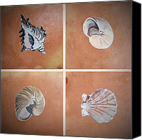 Beaches Ceramics Canvas Prints - Sea Shells Canvas Print by Andrew Drozdowicz