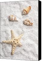 Sea Shells Canvas Prints - Sea Shells Canvas Print by Joana Kruse