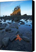 Second Beach Canvas Prints - Sea Stacks and Starfish Canvas Print by Byron Jorjorian and Photo Researchers