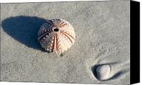 Beach Scenery Canvas Prints - Sea Urchin and Shell Canvas Print by Kenneth Albin