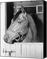 Belmont Canvas Prints - Seabiscuit 1933-1947, In His Stall Canvas Print by Everett