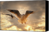 Seagull Photo Canvas Prints - Seagull Canvas Print by GilG Photographie