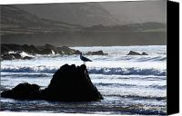 Beach Prints Canvas Prints - Seagull Rock Canvas Print by Aidan Moran