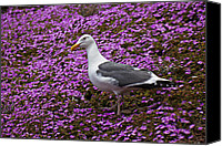 Seagull Photo Canvas Prints - Seagull standing among flowers Canvas Print by Garry Gay
