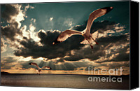 Seagull Photo Canvas Prints - Seagulls In A Grunge Style Canvas Print by Meirion Matthias